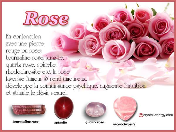 Propriétés de la rose associée aux pierres rouges et roses