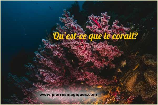 Qu'est-ce que le corail?