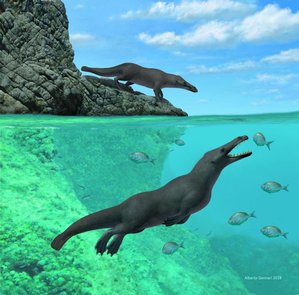 Découverte d'une baleine à quatre pattes au Pérou