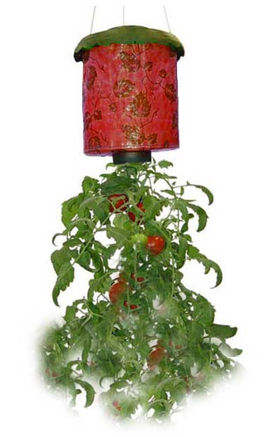 planteur inversé tomates herbes aromatiques